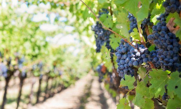 wijngaard camperreis TME